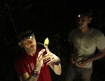 Dominic Monaghan dans la nature S02E03 Le coléoptère titan du Brésil