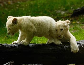 Le meilleur d'une saison au zoo (Documentaire) • Programme