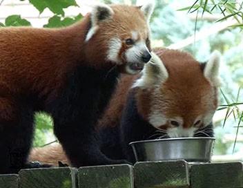 Le zoo de Beauval, tout un monde