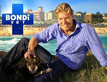 Le vétérinaire de Bondi Beach S02E10