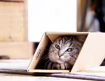 La vie secrète des chats S02E06 Mon chat est amoureux !