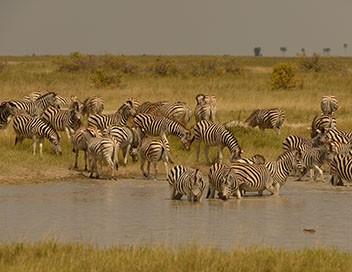 Terres sauvages en danger S01E03 Botswana, la piste retrouvée des zèbres
