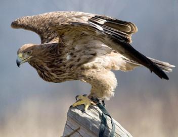 La course pour la vie E07 A tire d'ailes