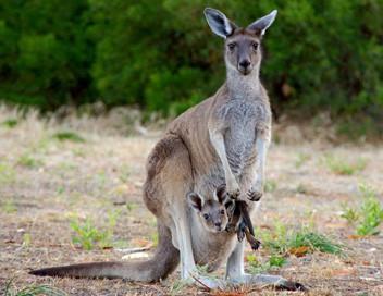 Australie : Portraits de quatre îles uniques E02 L'île Kangourou