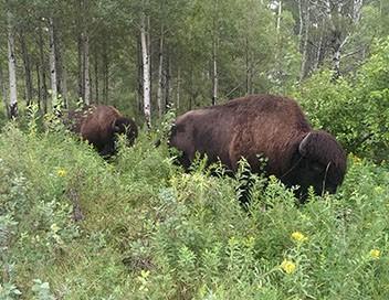 Les parcs nationaux canadiens S01E03 Mont-Riding : la nature vierge
