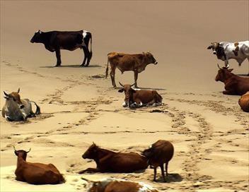 Vues d'en haut S09E00 La côte sauvage de l'Afrique du Sud