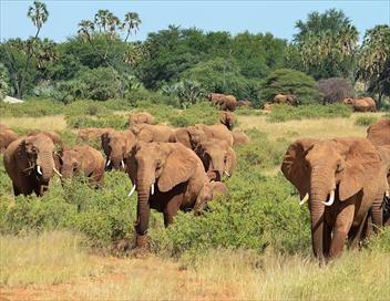 Grands voyageurs de la nature S01E01 Les éléphants