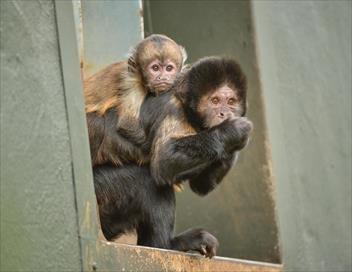 La vie secrète du zoo S02E04 Le clan des mamans