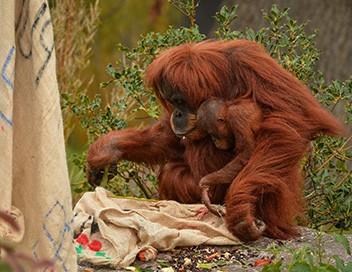 La vie secrète du zoo S02E06 A l'approche de Noël
