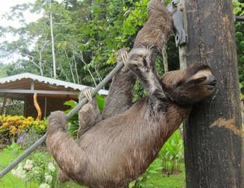 Bienvenue chez les paresseux E01 La vie au refuge