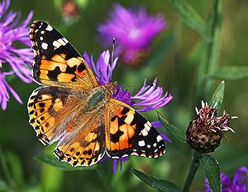 Curiosités animales E06 Des apparitions magiques : l'hirondelle et le papillon