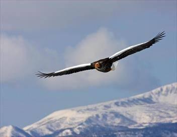 L'envol de l'oiseau