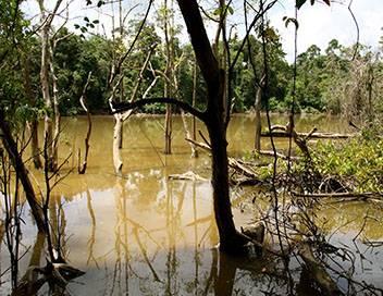Les mondes inondés S01E02 Kinabatangan, l'éden sauvage de Bornéo