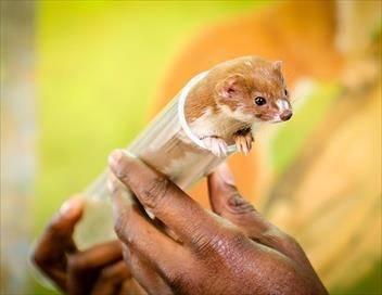 Le tour du monde des petites bêtes