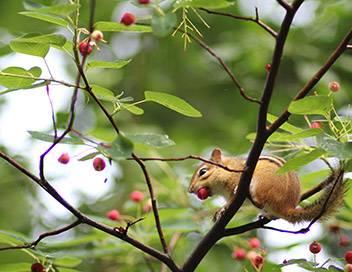 Faune urbaine en danger E11 La buse à queue rousse et l'écureuil blanc