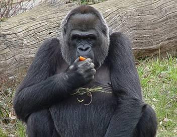 Wild Menu E14 Manger avec les doigts