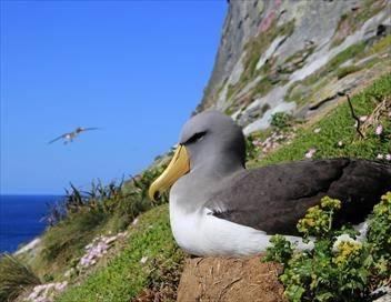 Dans les eaux bleues de Nouvelle-Zélande S02E03 Les îles Chatham