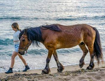 Espagne, la femme qui sauvait les chevaux