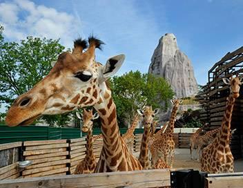 Un zoo à Paris S01E02 Les girafes sont chez elles