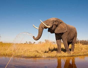 Nature fragile S01E02 La savane africaine