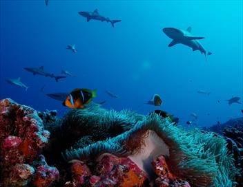 Le grand inventaire de la planète S01E00 Polynésie : Tuamotu, l'archipel absolu