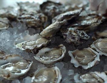 Agitateurs de goût S01E01 L'huître en Occitanie