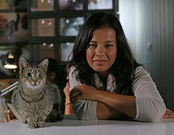 Chats des villes et chats des champs E01 Tous les sens en alerte