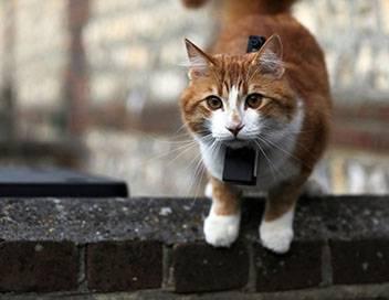 Chats des villes et chats des champs E03 La communication féline