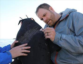 Josh Gates à la recherche du mégalodon