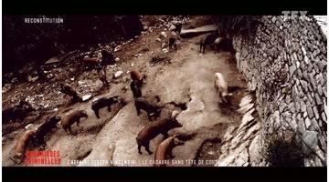Affaire Joseph Vincensini : comment les meurtriers ont voulu faire disparaître le corps en le donnant… aux cochons