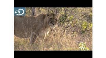 Lone Target : Afrique du Sud