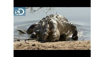 Joël face à la faune sauvage : Lone Target