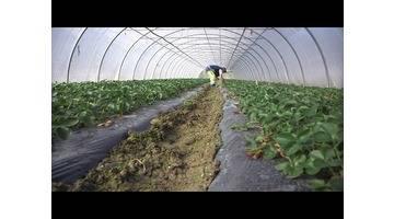 Agriculture : comment manger plus sain ? - Tout Compte Fait