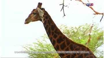 Au Sénégal, les animaux sauvages menacés par le réchauffement climatique