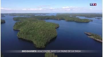 Finlande : à la rencontre des animaux mystérieux du lac Saimaa