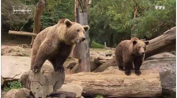 Une nuit au zoo : dormir parmi les animaux, c'est possible