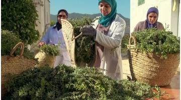 Fromage de chèvre et plantes aromatiques du Maroc