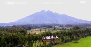 Le document - Le Rwanda, un trésor pour les gorilles