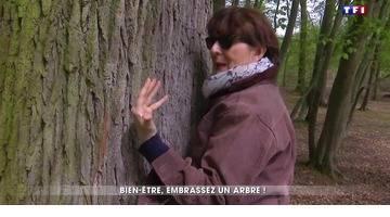 Sylvothérapie, la thérapie par les arbres
