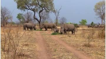 Zambie, parc national de Mosi Oa Tunya